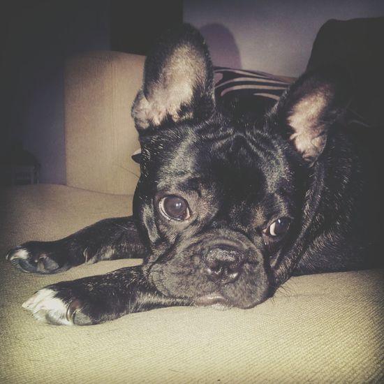 Dogstyle Mora Love Love❤