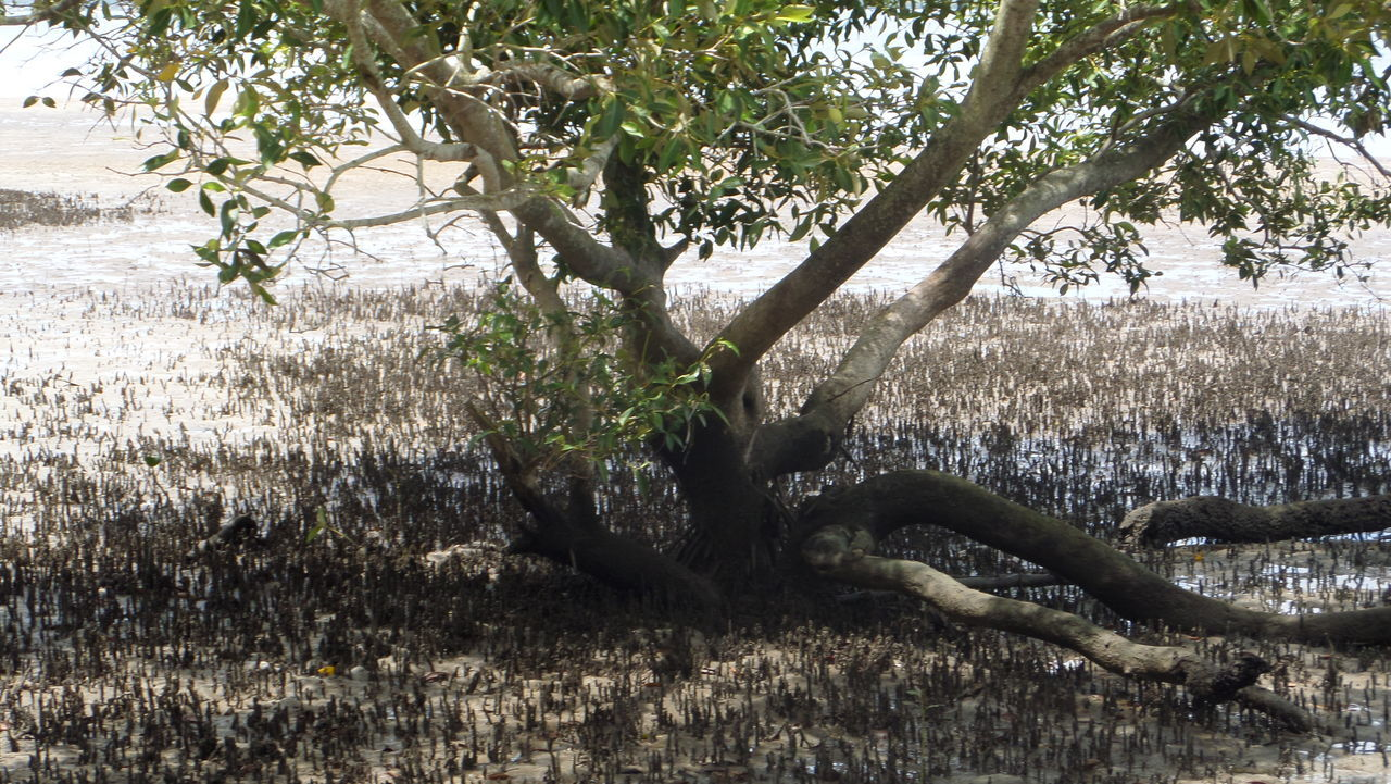 Beauty In Nature Branch Day Grass Growth Mangrove Life Mangroves Nature No People Outdoors Tree