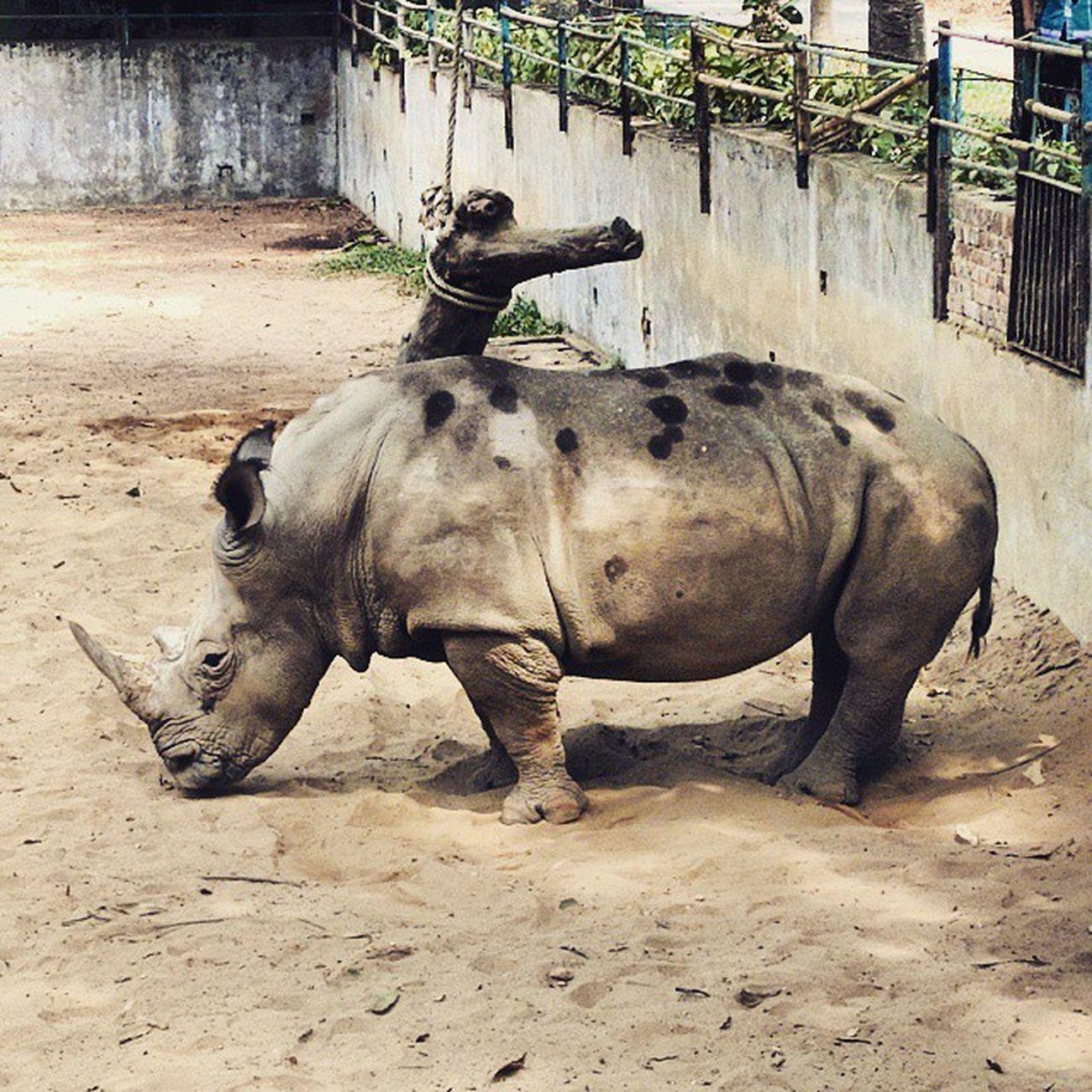 Protect Preservewildanimals Rhinos Rhinoceros help