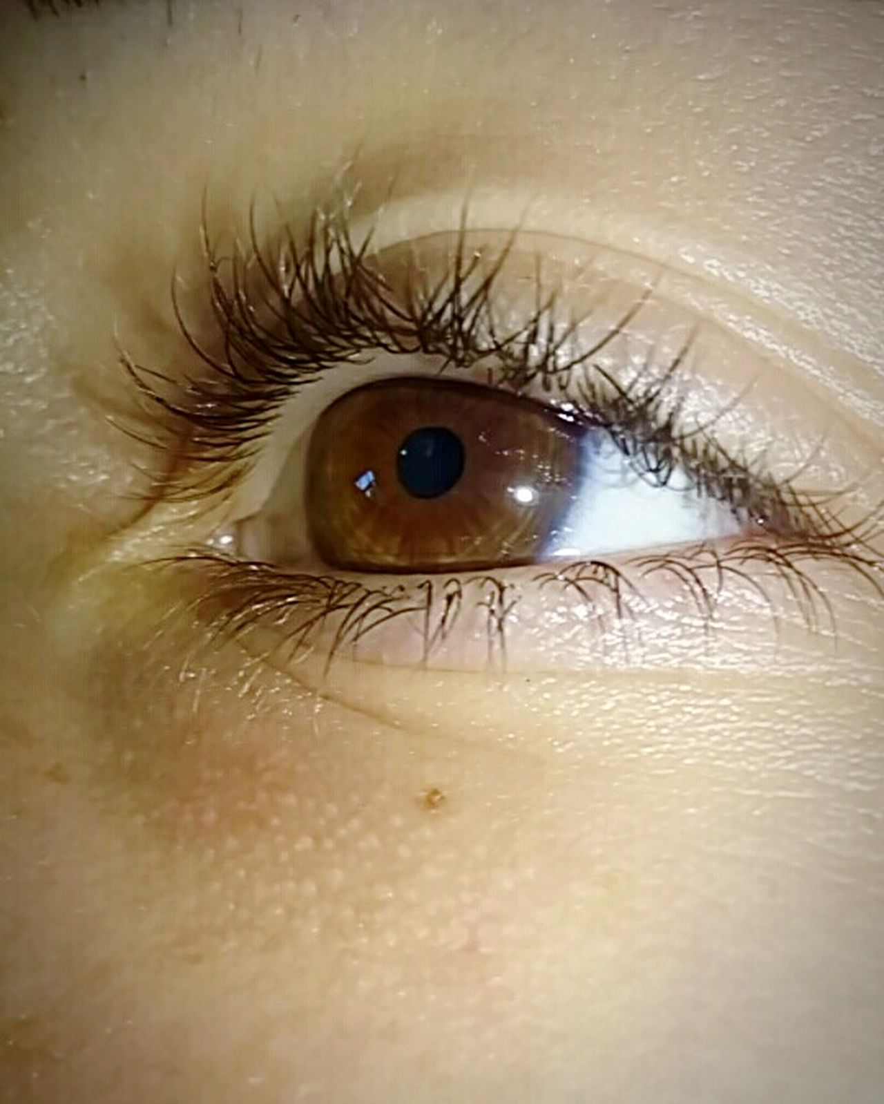 Browneyes Illumination Human Body Part Flashlight Looking At Camera Iris - Eye People Vibration