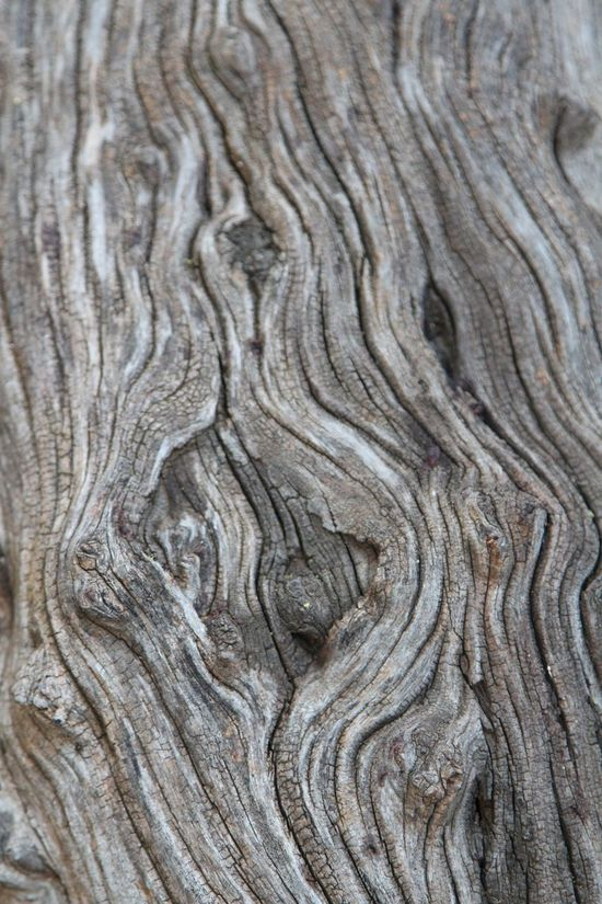 My heart!!!! Backgrounds Nature Pattern Wood - Material No People Wood Grain Curve Pine Tree Landscape Textured  Full Frame Knotted Wood Close-up Outdoors Day Desert Arid Climate Tree Ring Time Beauty In Nature