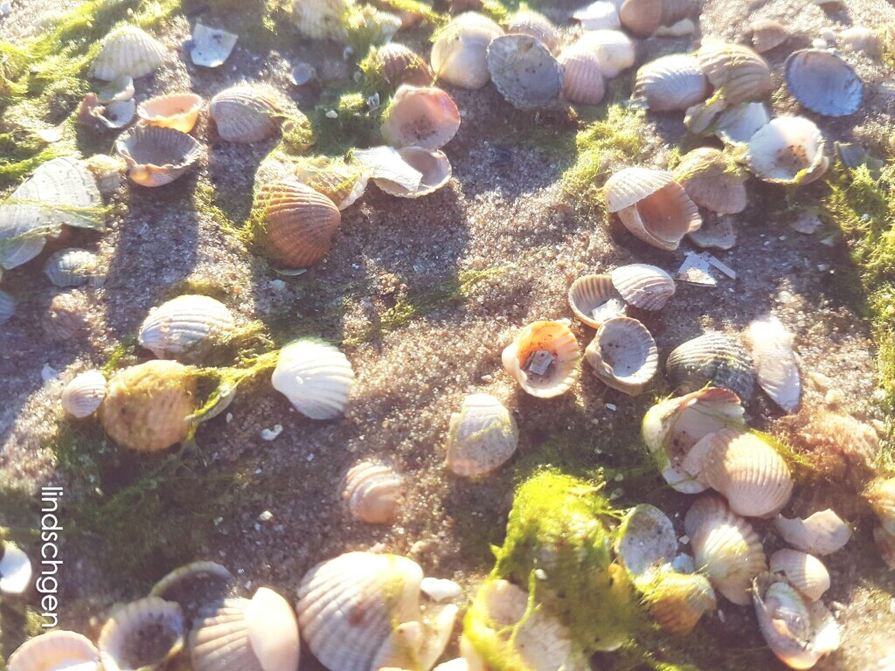 Schönheiten am Strand - Herzmuscheln 💟🐚💟 Beach Sea Water Nature Beauty In Nature Shells🐚 Sand Sonne, Strand Und Meer EyeEm Best Shots Urlaub Muscheln EyeEm Best Shots - Nature Glücklich Baltic Sea Ostsee EeYem Best Shots EyeEm Nature Lover Day Steine Und Meer Nature In Beauty Strand Sand & Sea Beauty In Nature Nature
