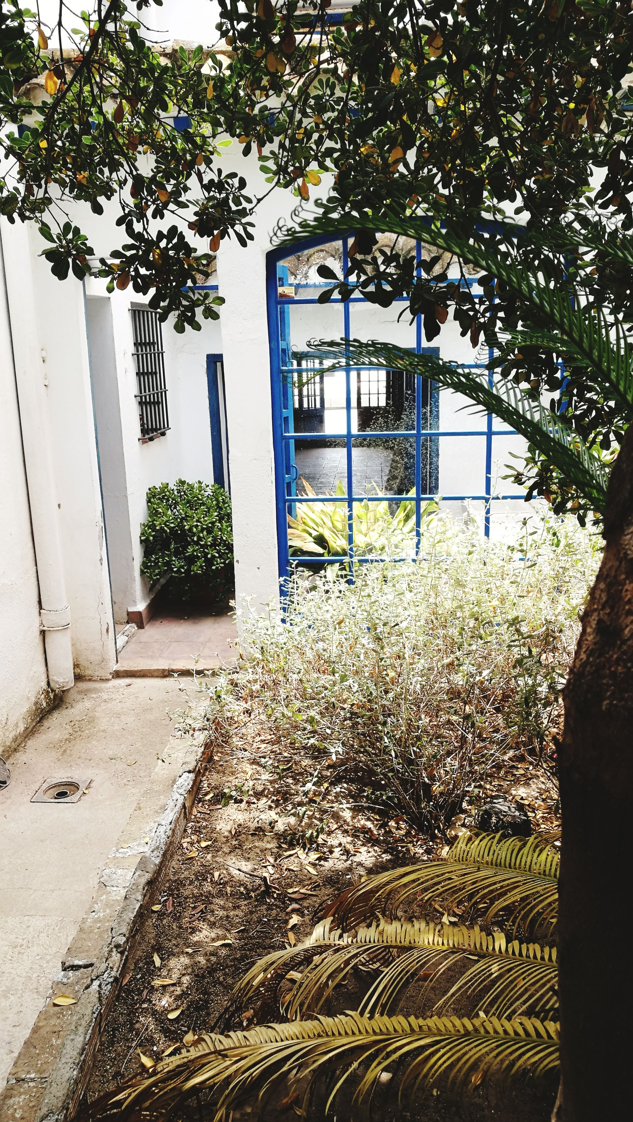 growth, door, house, entrance, architecture, plant, building exterior, tree, no people, built structure, day, outdoors, window, doorway, nature