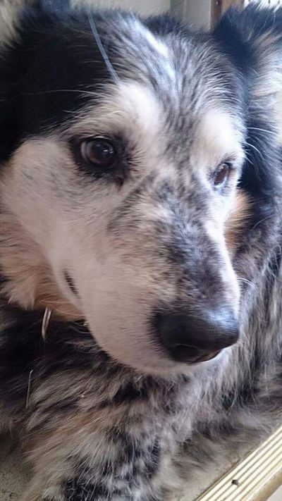 My pensive pup. I Love My Dog Dogs Dog Love Relaxing Dog Dog❤ Lostinthought Pensivedog