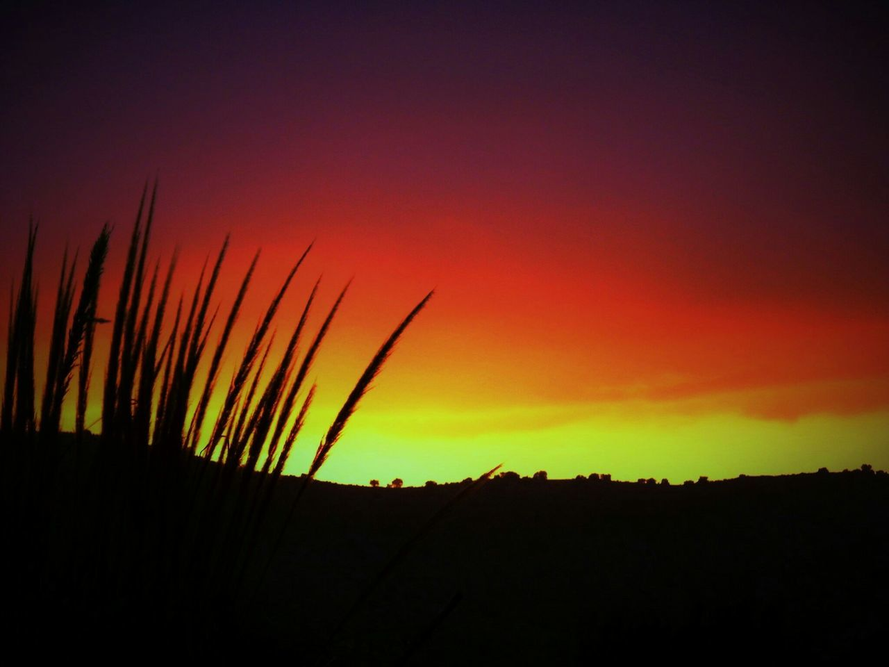 sunset, nature, silhouette, beauty in nature, orange color, tranquil scene, scenics, sky, tranquility, growth, dusk, no people, outdoors, plant, day