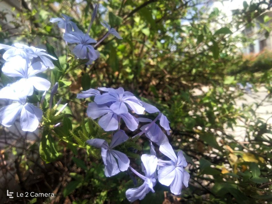 Fragility Nature Flower Growth No People Day Beauty In Nature Plant Outdoors Tree Close-up Flower Head EyeEmNewHere Le2 Le2 Camera LeEco Le2 Touching LeEco