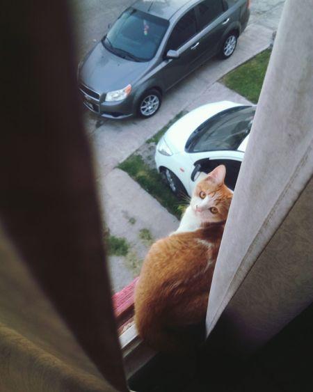 My Cat Window Second Floor