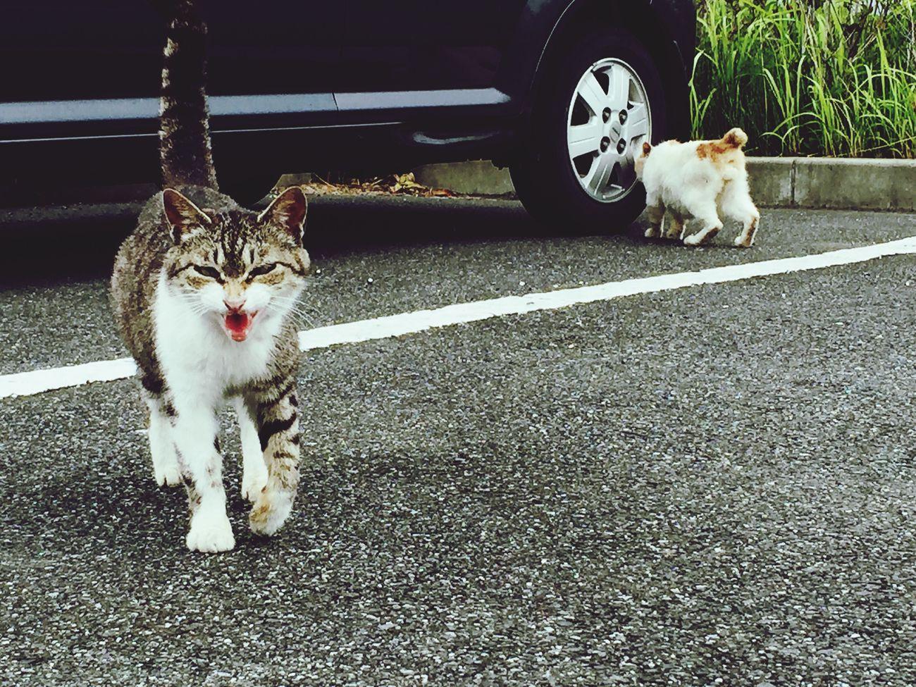 車を停めるなり直ぐ寄って来た可愛いお外の友達(野良ちゃん)