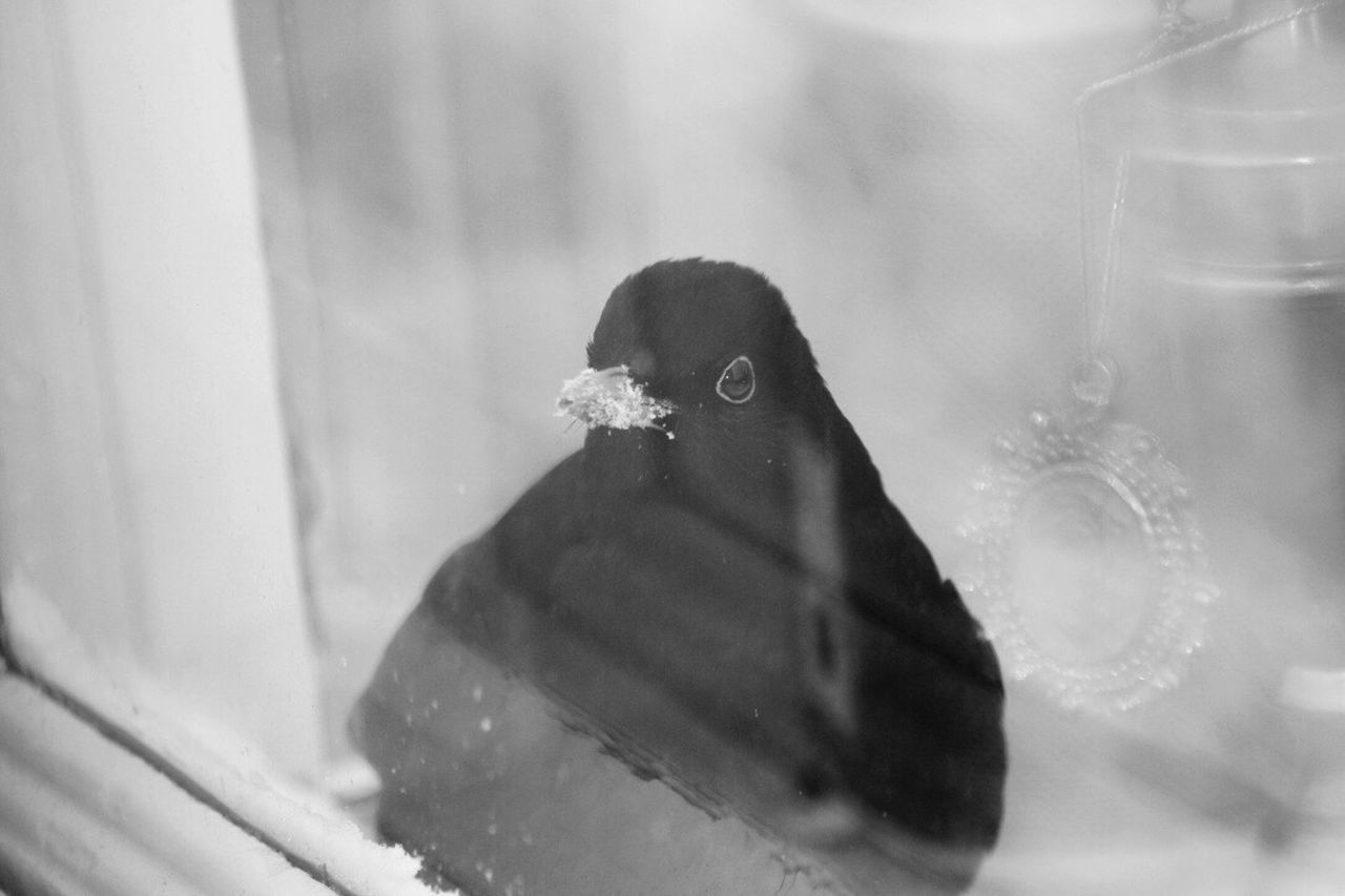 One Animal Close-up Birds In The Wild Animal Wildlife Outdoors Bird Photography Bird Eyeem Birds 🐦 Birds_collection EyeEm Gallery Blackbird Birds Of EyeEm  Birdsofinstagram Birdoutsidemywindow Bill