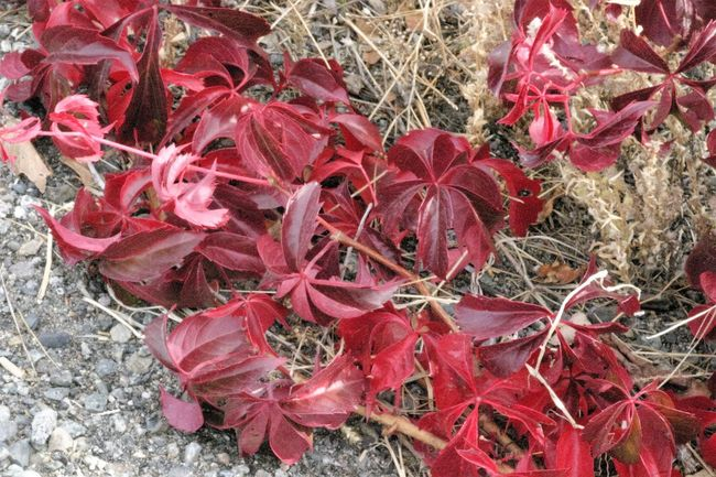 Experametal... Autumn Autumn Colors Beauty In Nature Botany Close-up Day Fall Beauty Fall Colors Fall Time Focus On Foreground Fragility Freshness Full Frame Growing Growth Leaf Nature No People Outdoors Plant Plant Life Red Tranquility