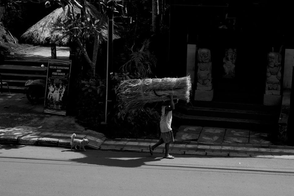 ubud is a mood B&w Street Photography Bali Day Dog Farmer Carrying Harvest Full Length INDONESIA Indonesia_photography Lifestyles Man Carrying Large Object One Person Outdoors People Real People Street Dog Street Photography Ubud Ubud, Bali