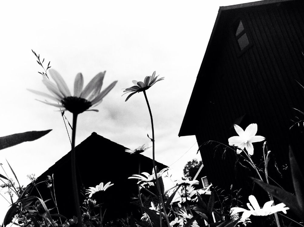 blackandwhite at Västerfors by Karin