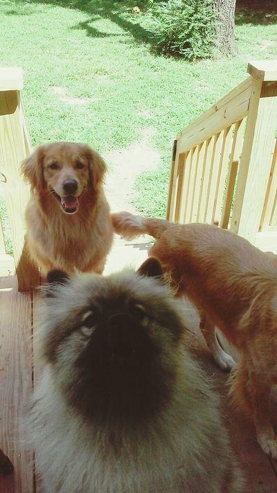 Summer Dogs Taking Photos Hello World