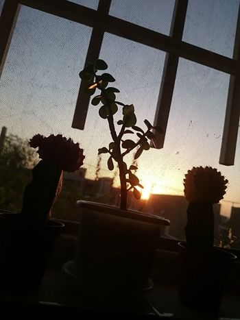 Window Close-up Sky XperiaZ1 Z1 Cactus Sunset