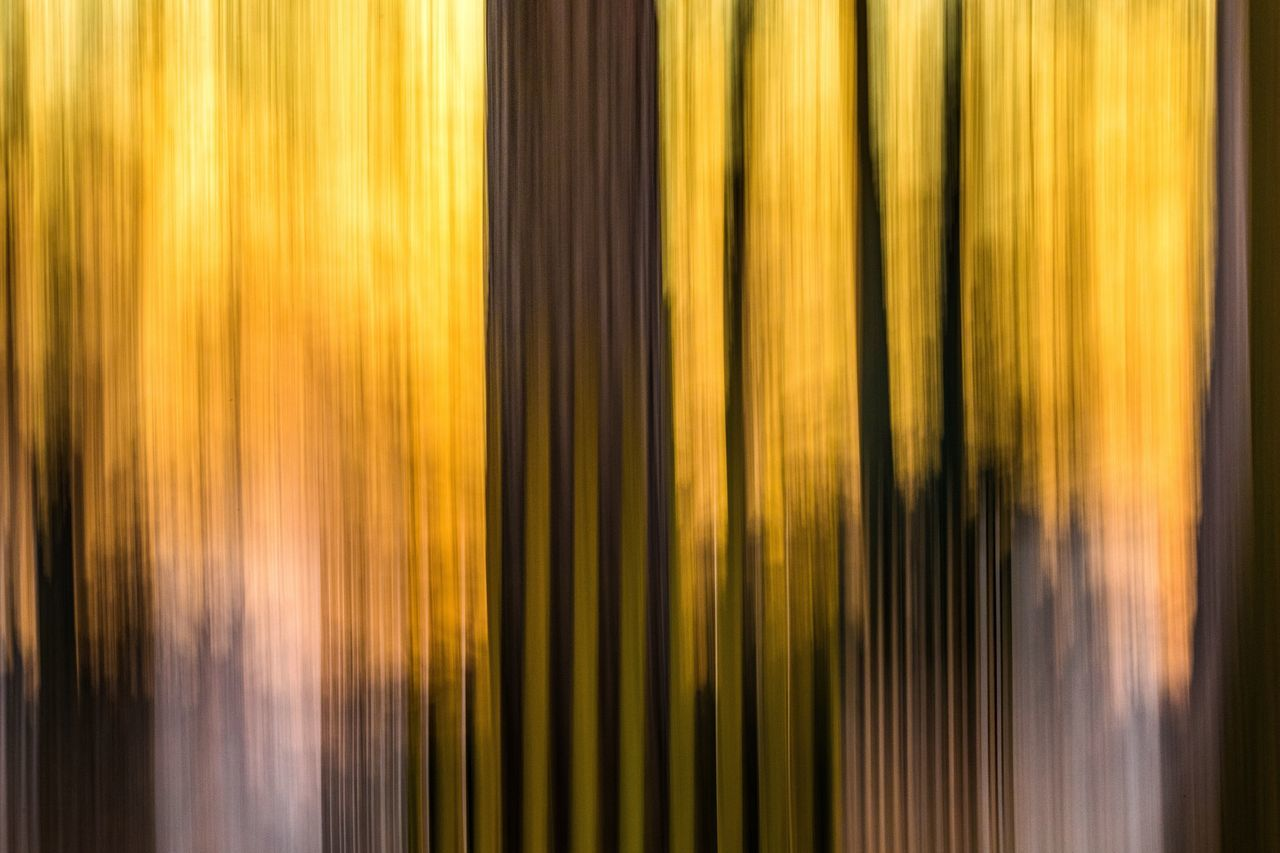 yellow, abstract, backgrounds, textured, close-up, no people, outdoors, day