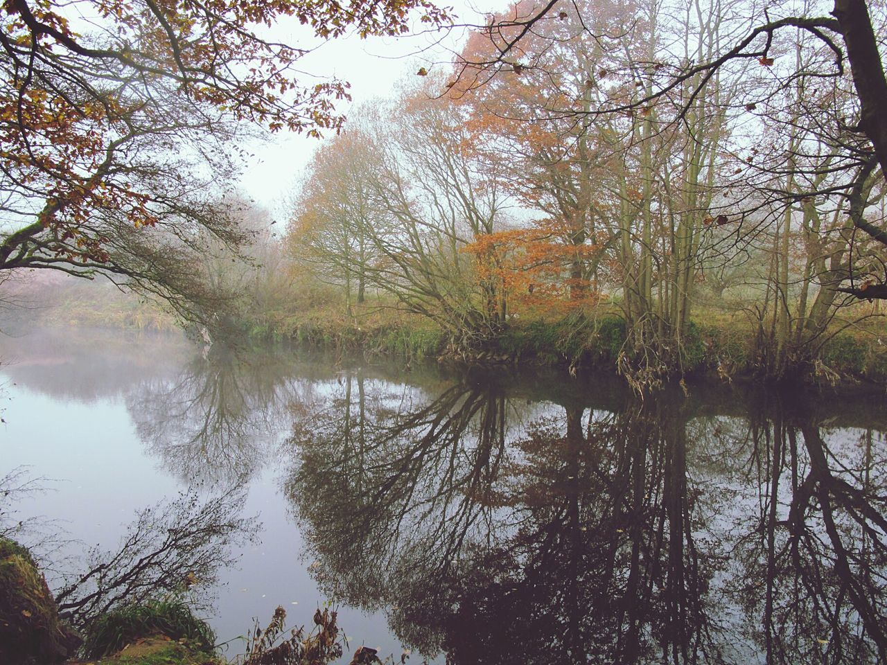 Cold Temperature Autumnbeauty Autumn Leaves EyeEmbestshots Foggy Morning Valleys Woodlands Fineartphotography Reflection River Bank  Autumn Tranquil Scene Beauty In Nature WoodLand Foggymornings Outdoors Frosty Days Scenics Tranquility Non-urban Scene Landscape Fog Water Day Enchanted Forest Winter Is Coming