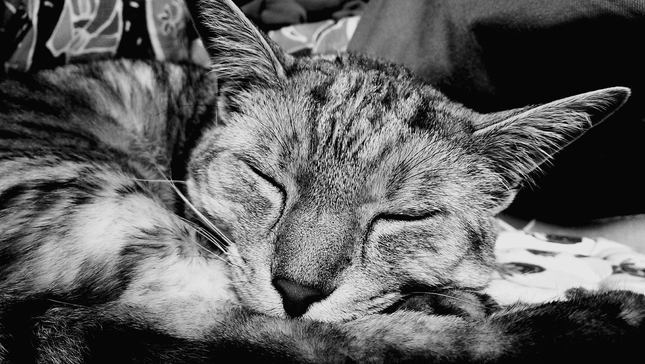 Monochrome Blackandwhite Cute Cats Catslife Catlover I Love My Cat ❤ Cats Of EyeEm Cat♡ Cats Of The Day Hi!