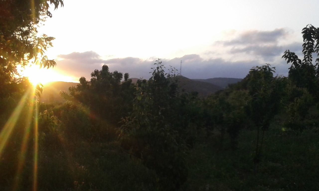 sunset, tree, nature, sun, sunbeam, growth, mountain, tranquil scene, beauty in nature, tranquility, no people, sunlight, scenics, sky, outdoors, landscape, plant, forest, day
