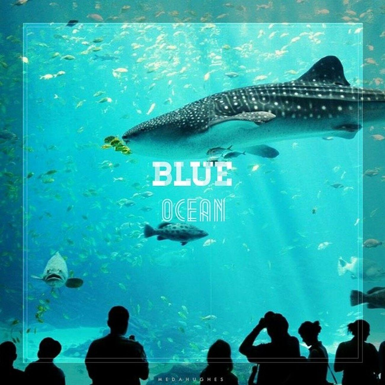 Blue Ocean Blueocean Piclab i love blue ocean 😁