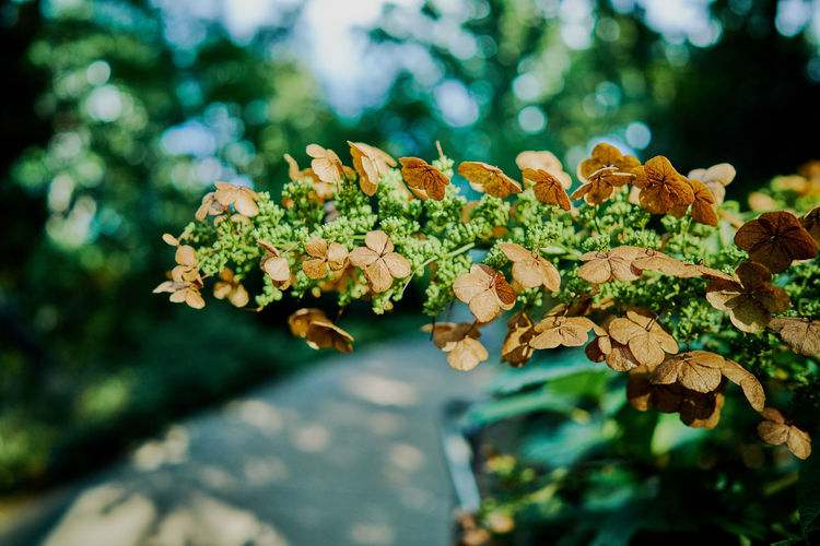 Bulow Creek State Park Art Photo Beauty In Nature Bokeh Bokeh Background Bokehlicious Bronze Bronze Foliage Cloud-sky Day Film Lovers Foliage Fragility Freshness Growth Inspiration Leaf 🍂 Motion Photography Nature Outdoors Petals🌸 Plants 🌱 Sky Tranquil Scene