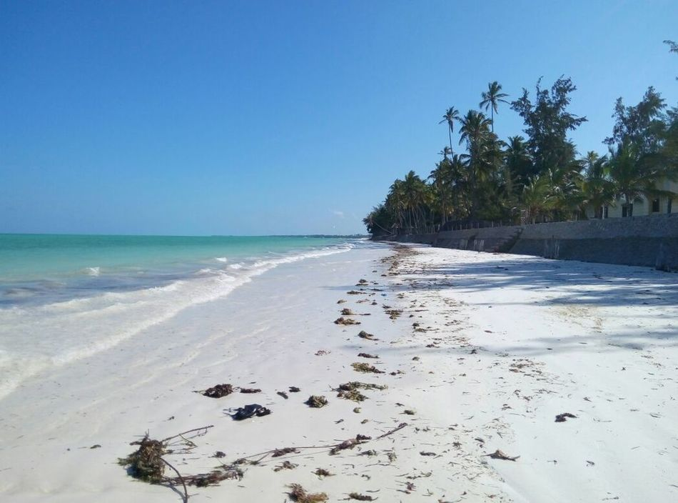 Sea Beach Blue Zanzibar🏊🏄🎣 Travel Sand Sky No People Outdoors Water Tree