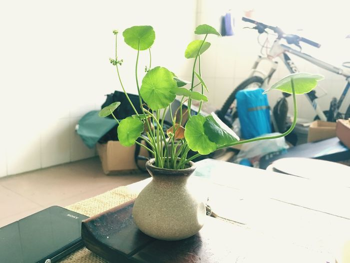 Indoors  Domestic Kitchen Potted Plant Plant Home Interior Domestic Room Leaf Vase No People Kitchen Day
