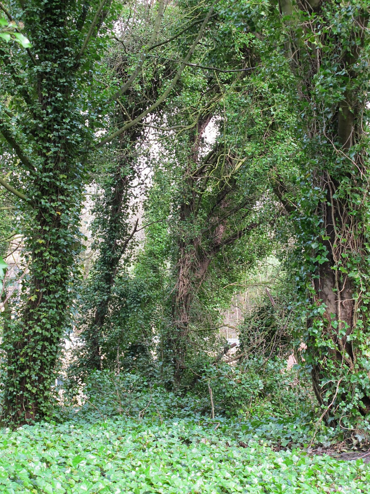 Growth Green Color Tree Nature No People Grass Day Outdoors Beauty In Nature Beauty In Nature Landscape Lush - Description Scenics Canals And Waterways Ivy Green Color