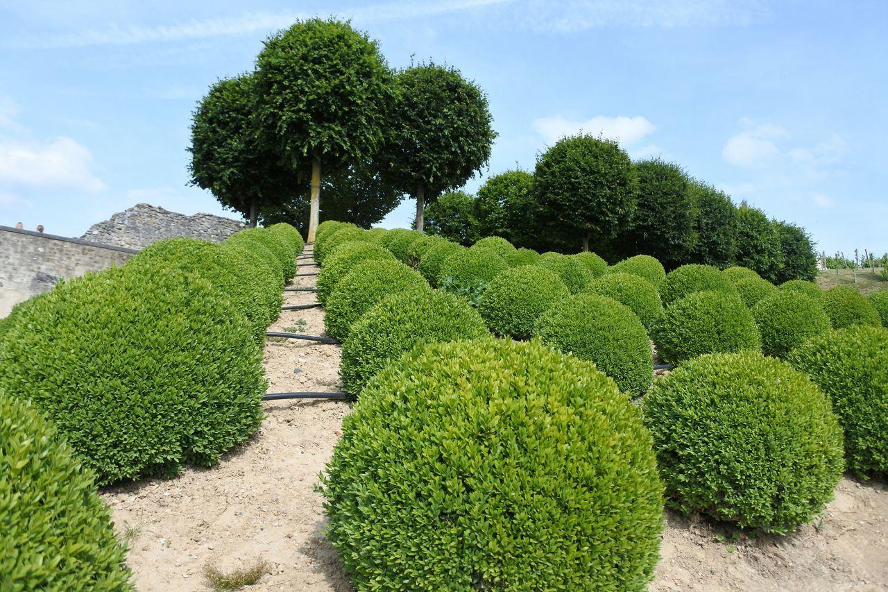 Beautiful stock photos of france, Amboise, Bush, Day, Evergreen Tree