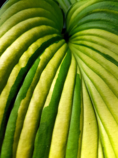 Tropical foliage Backgrounds Close-up Day Food Food And Drink Freshness Full Frame Green Color Nature No People Outdoors