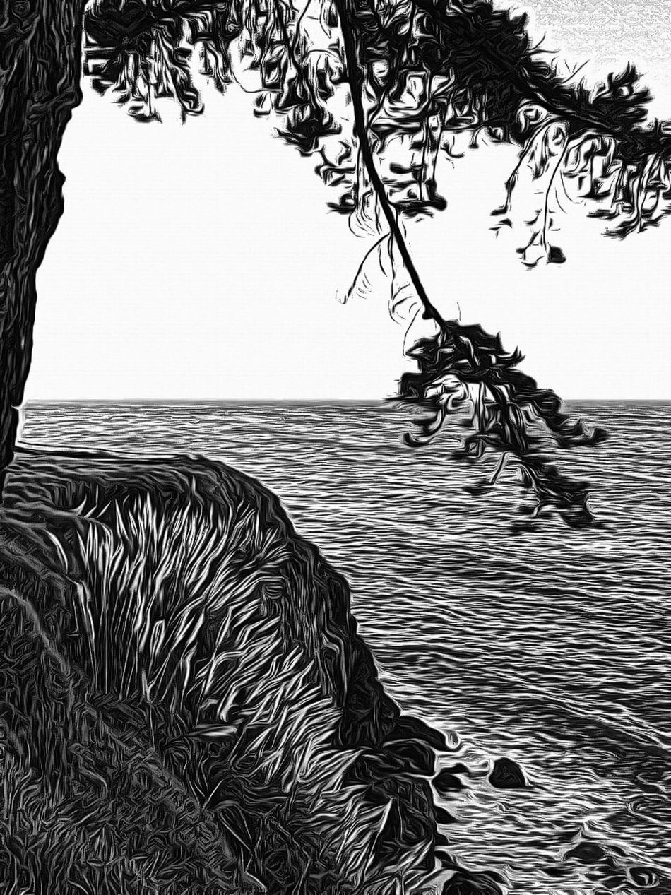 Beauty In Nature Black And White Nature Texture Tranquil Scene Tree Wood Cut
