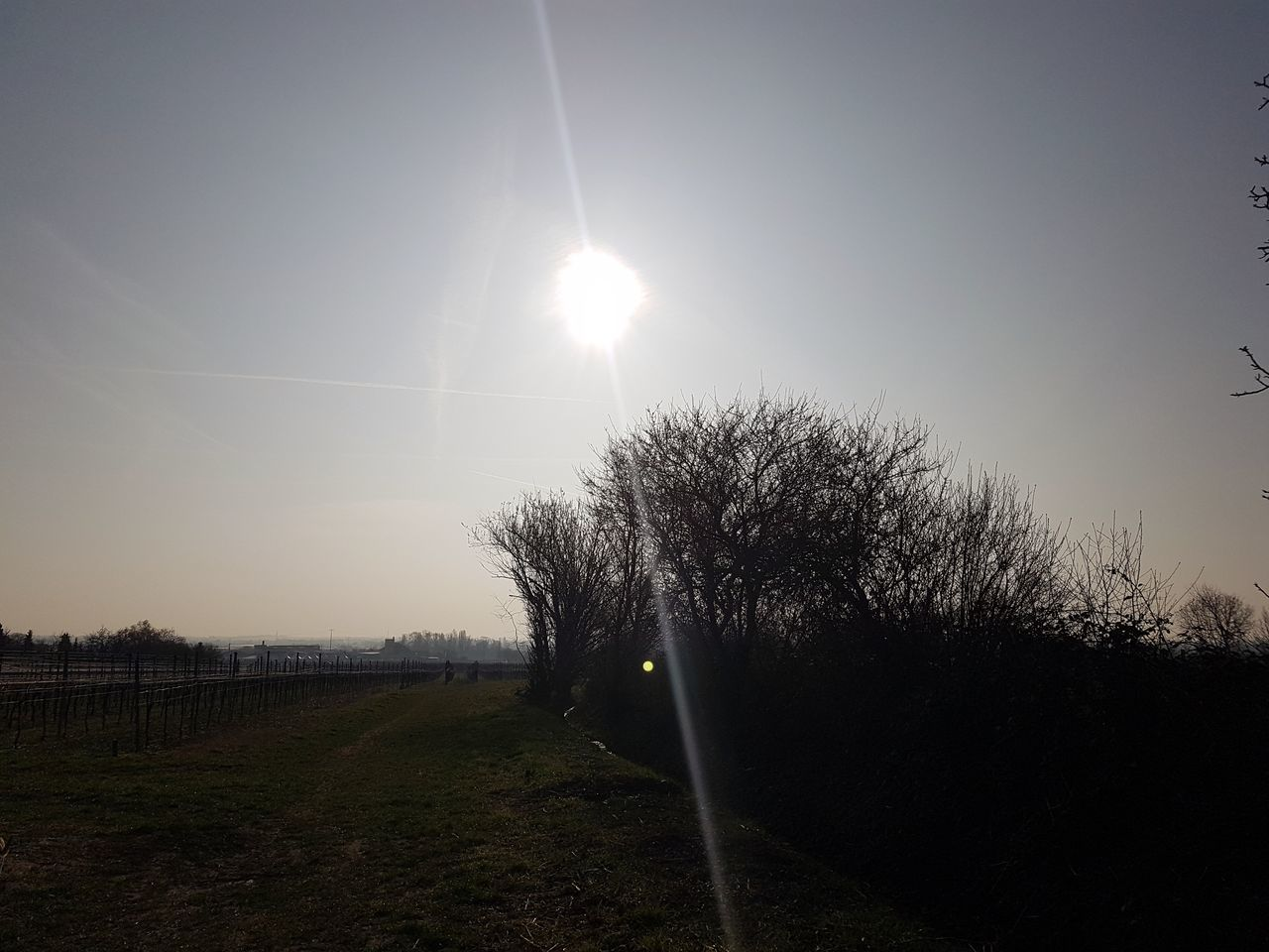 sun, sunlight, sunbeam, lens flare, tranquility, beauty in nature, nature, outdoors, grass, day, no people, tree, sky, clear sky