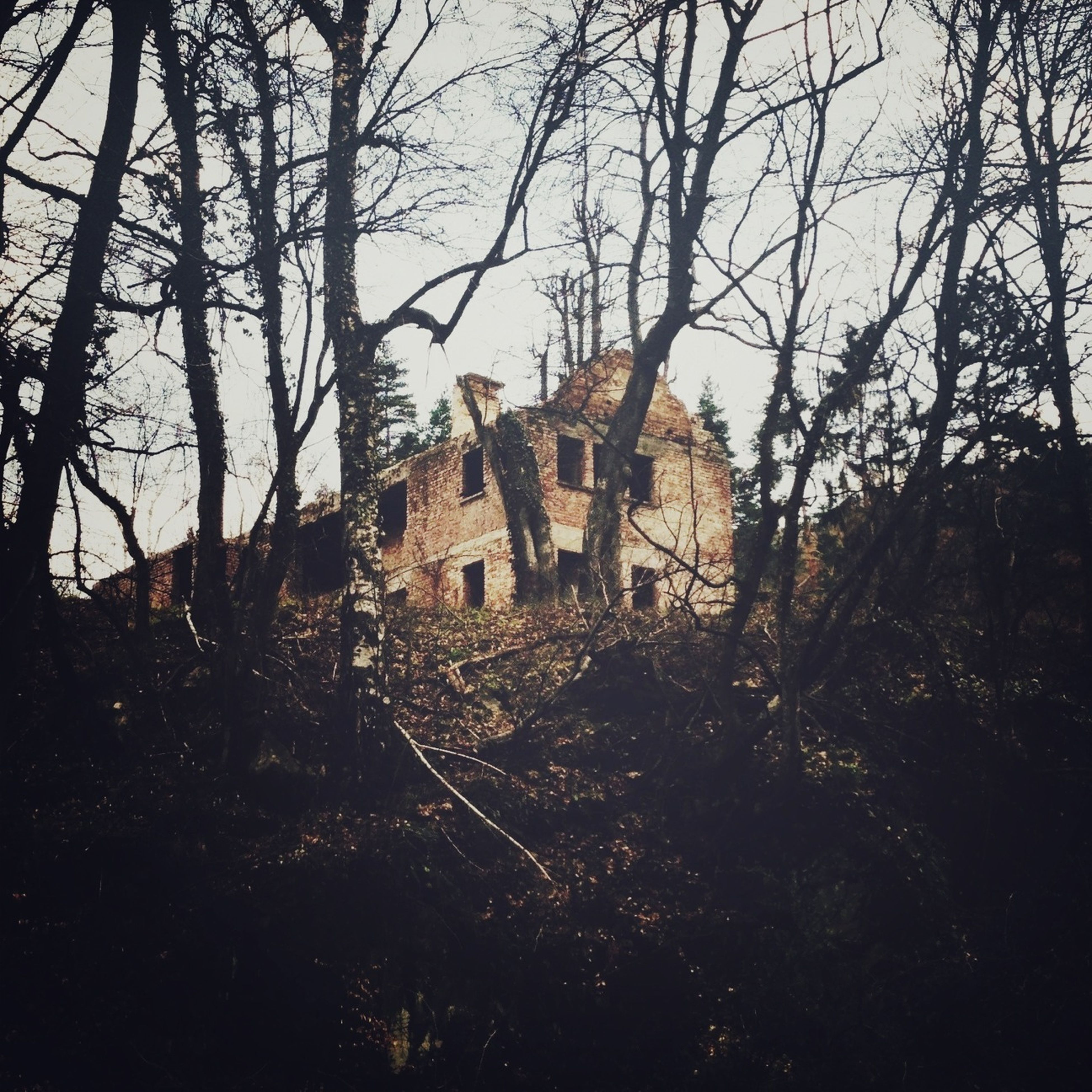 architecture, built structure, building exterior, tree, old, bare tree, sky, house, abandoned, damaged, clear sky, history, old ruin, obsolete, run-down, deterioration, branch, outdoors, no people, day