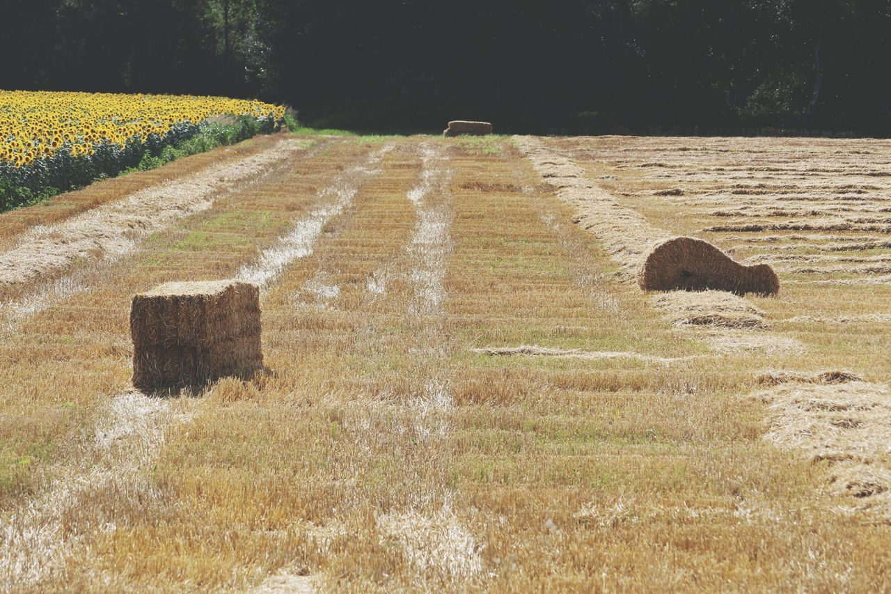 field, nature, landscape, outdoors, day, no people, grass, agriculture, tree, tranquility, hay bale, beauty in nature, mammal