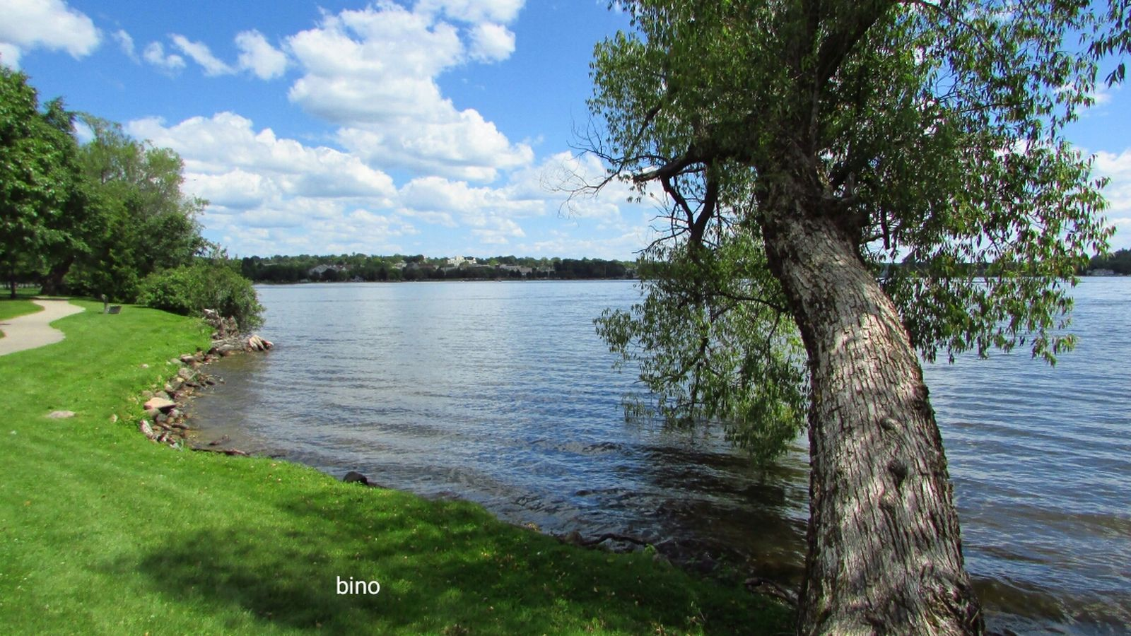 Afternoon Walk Around The Lake Sunny Day 🌞 Blue Sky And White Clouds Leaning Tree Beauty In Nature Lake Cadillac Pure Michigan