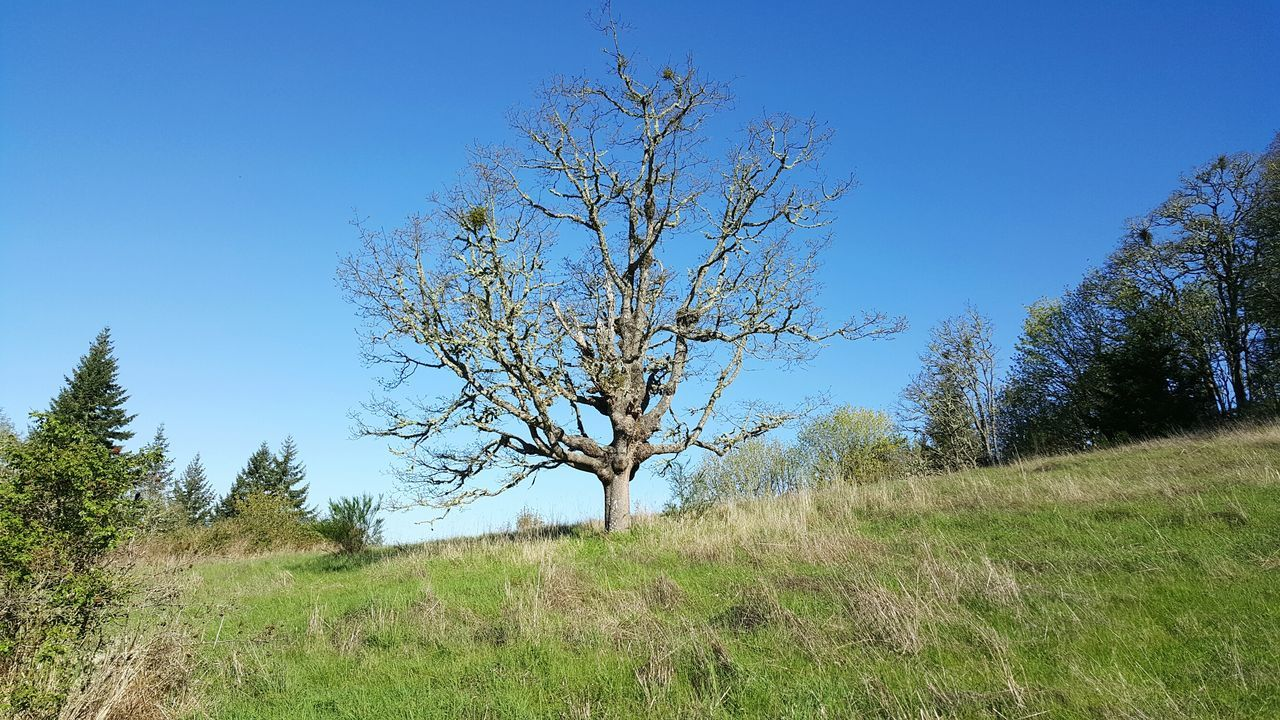 """even when i'm standing alone, i'm still standing."" - the tree on the hill. Tree Bare Tree Nature Hill Blue Sky Solemn Quiet Moments Spring Oregon Mountpisgah Theclimb"