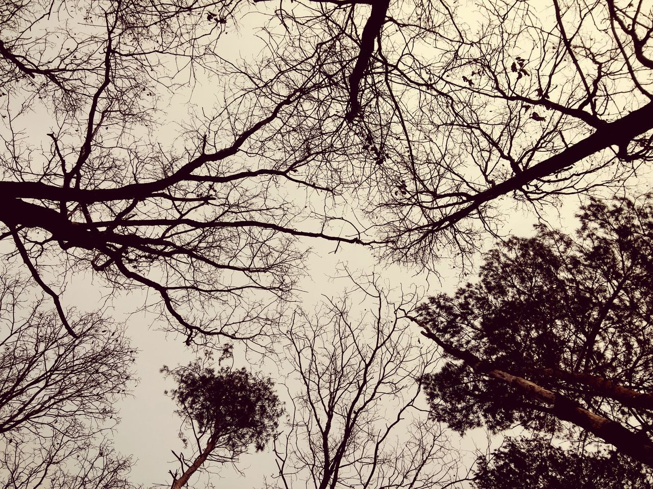 tree, branch, low angle view, bare tree, nature, beauty in nature, outdoors, sky, no people, tranquility, growth, clear sky, scenics, silhouette, day, forest