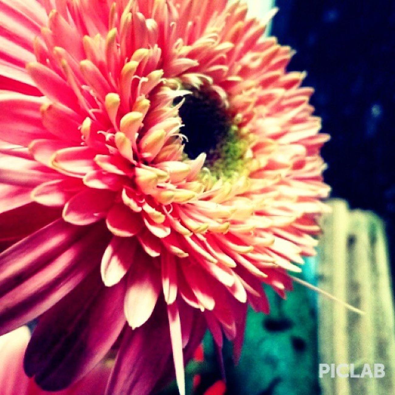 Learn to bloom from the flower. Learn to spread happiness around yourself to the people , so that the positivity can bring the same visual delight to people that they experience merely by looking at a flower. Be that sweet fruit in life that everyone would want to taste just as everyone wants to smell the aroma of a beautiful flower. Flower Delightful Igers Piclab Igersphotography Latergram Lovelymorning