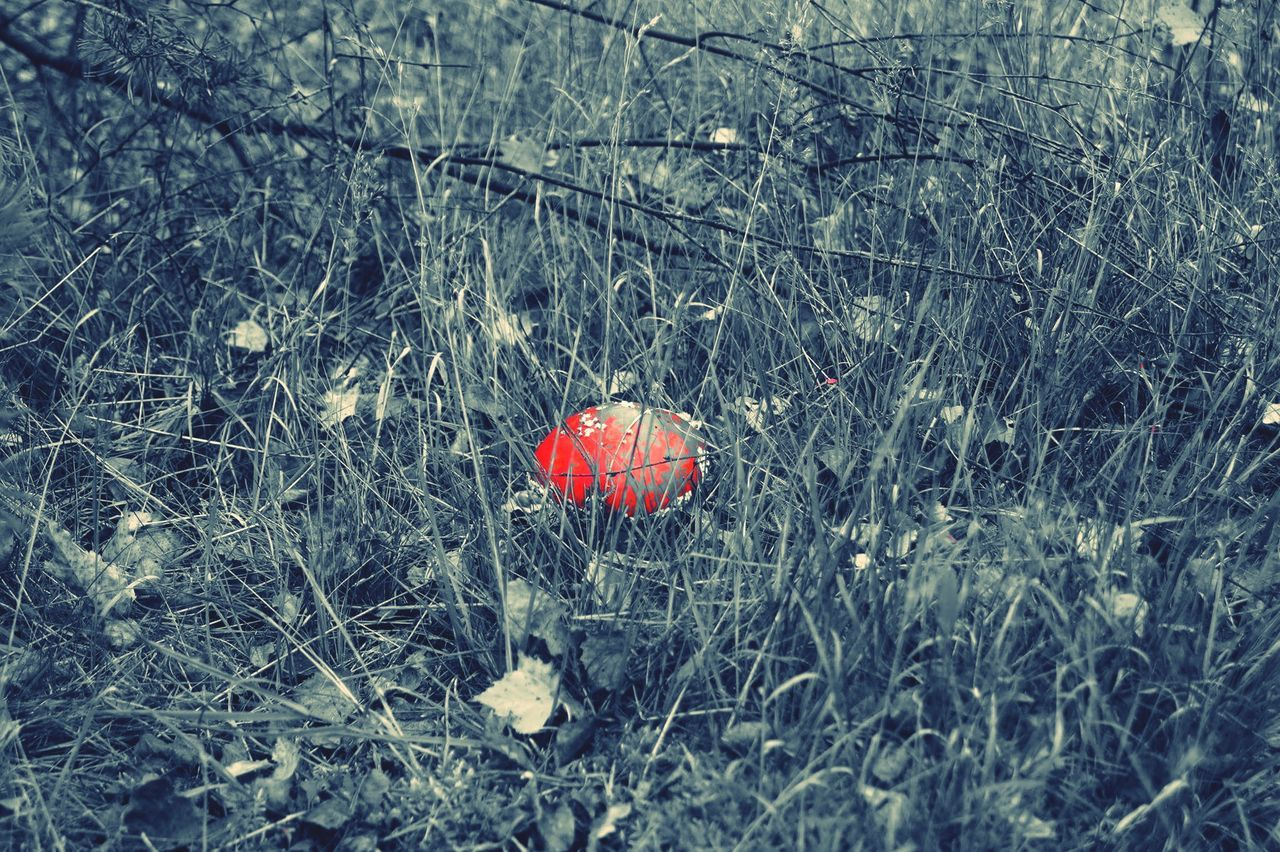 Red hot chili champignon alone in the woods Red Nature Field Fly Agaric Mushroom Close-up Beauty In Nature Champignon Red Chili Woods Hot Food Mushroom_pictures Mushroom Mushroomphotography Blackandwhite Blackandwhite Photography Photo From Above