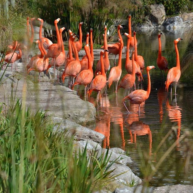 Flamencos Temaiken Bioparque Colores Colorful Argentina aves