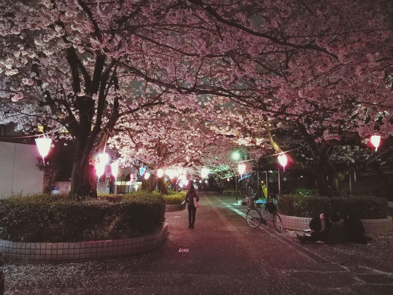 tree, real people, branch, walking, men, nature, flower, blossom, outdoors, springtime, growth, full length, beauty in nature, women, tree trunk, leisure activity, park - man made space, walkway, large group of people, illuminated, night, fragility, sky, city, freshness, people
