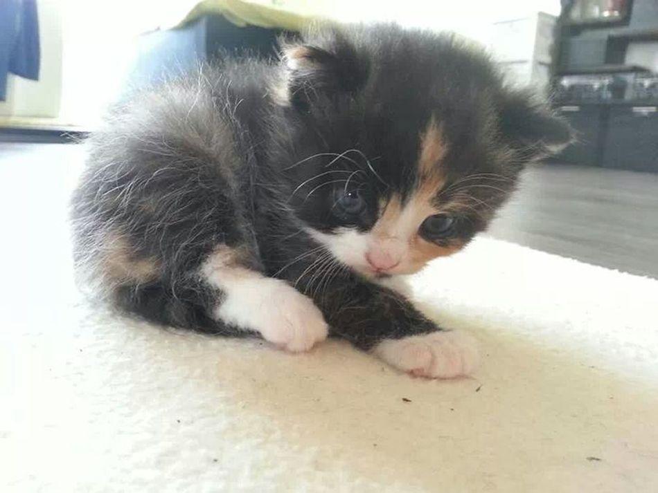 Cat Kitty