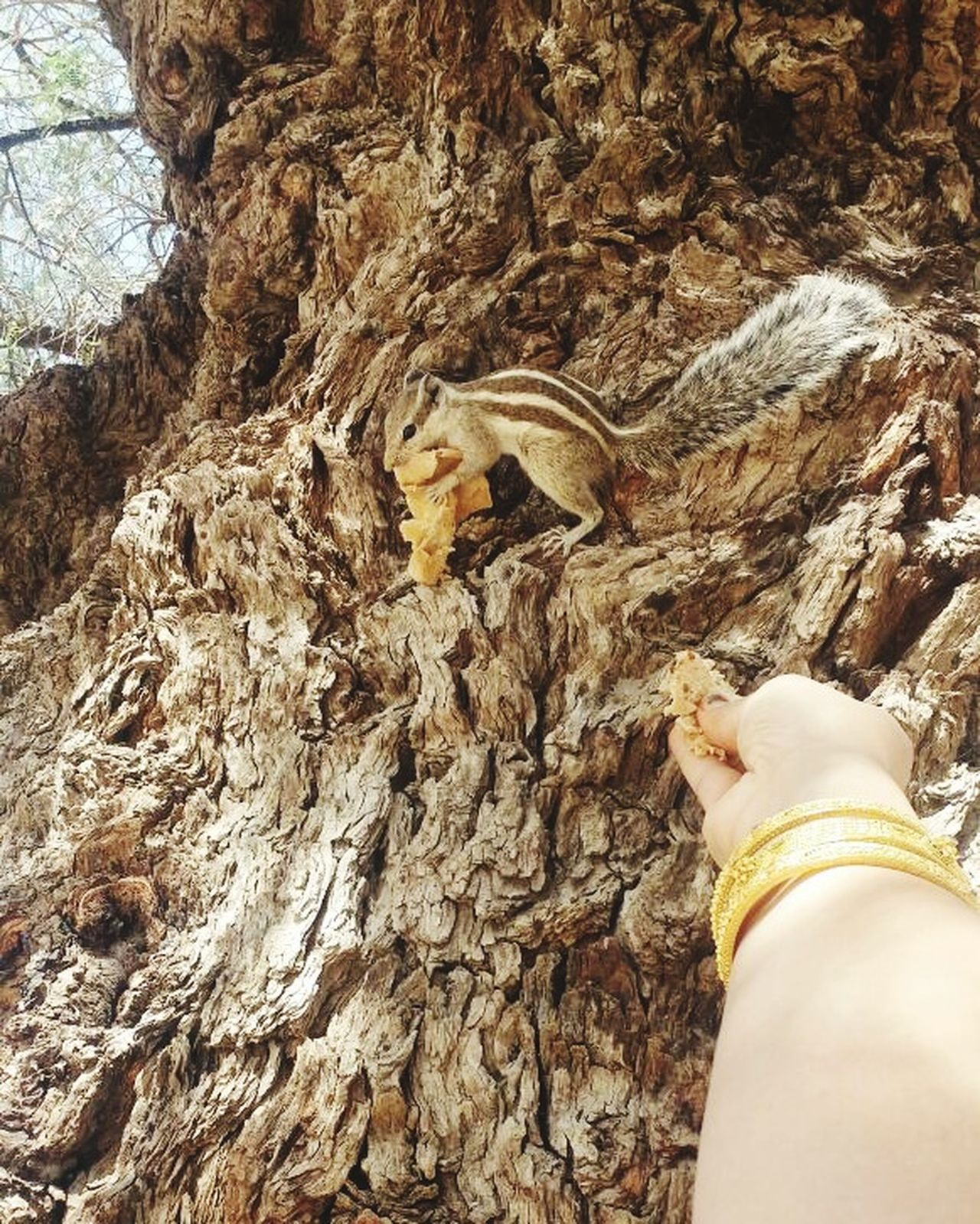Feeding Animals Squirrel Old Tree my Hand Check This Out Animal Love ♥ Relationship Long Time Ago i used to feed squirrel everytime i be to my nani's house. She pefectly knows the sound of my wistle ..runs to me ❤ In Love With It ❤ Enjoying Life