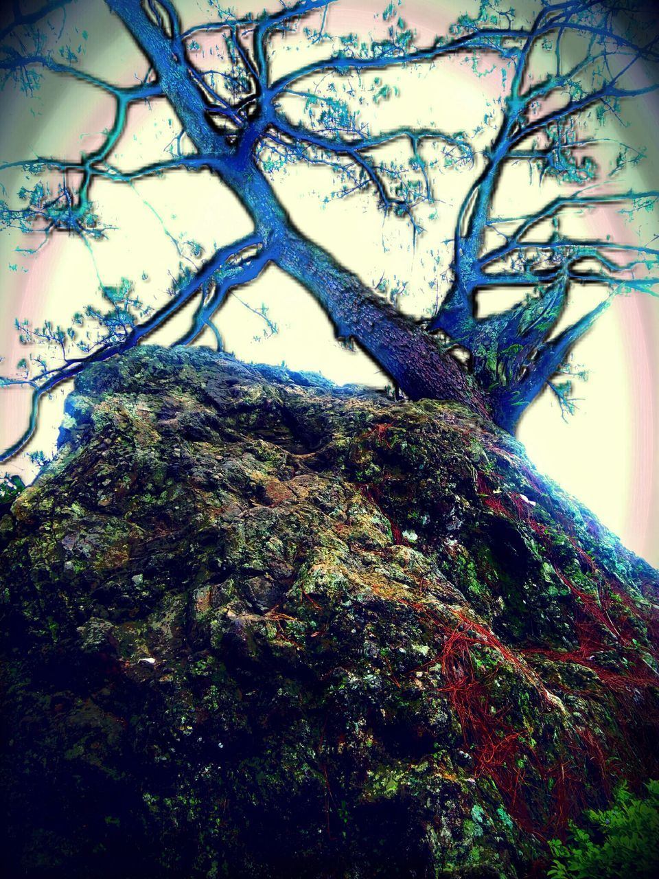 tree, tree trunk, branch, nature, growth, day, bark, no people, beauty in nature, forest, outdoors, close-up, dead tree, sky