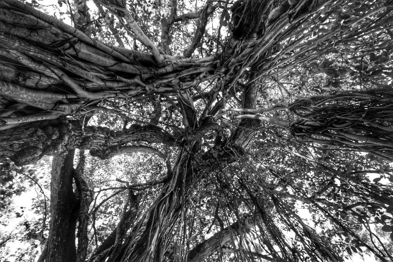 Tree Nature Low Angle View Growth No People Beauty In Nature Tree Trunk Trees Tree TreePorn Trees And Sky Forest EyeEm Nature Lover Beauty In Nature Light And Shadows Black And White Blackandwhite Blackandwhite Photography Monochrome Outdoors Tree_collection  Walking In The Woods Sky Tranquility Nature
