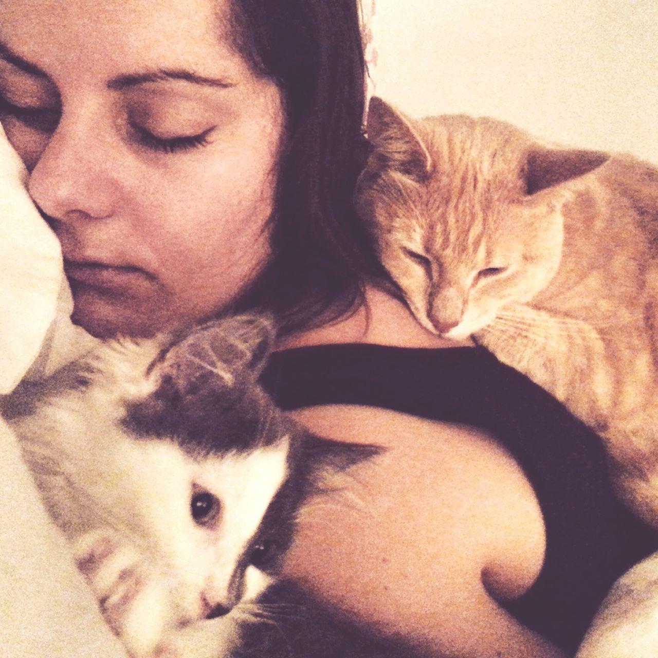 Biscuit and Harvey nursing Kate through her hangover hehe. Biscuitbiff Harveybiff Catsoneyeem