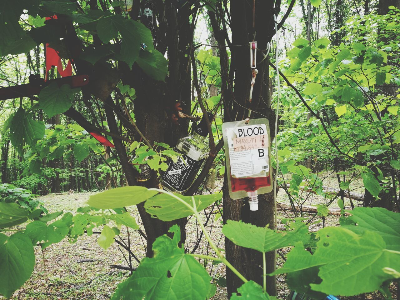 Outdoors Nature Plant Tree BLOODY Blood Jack Daniels Wiskey Wisky Wiskhey Wiskey Bottle Mountain Mountains Mountain View