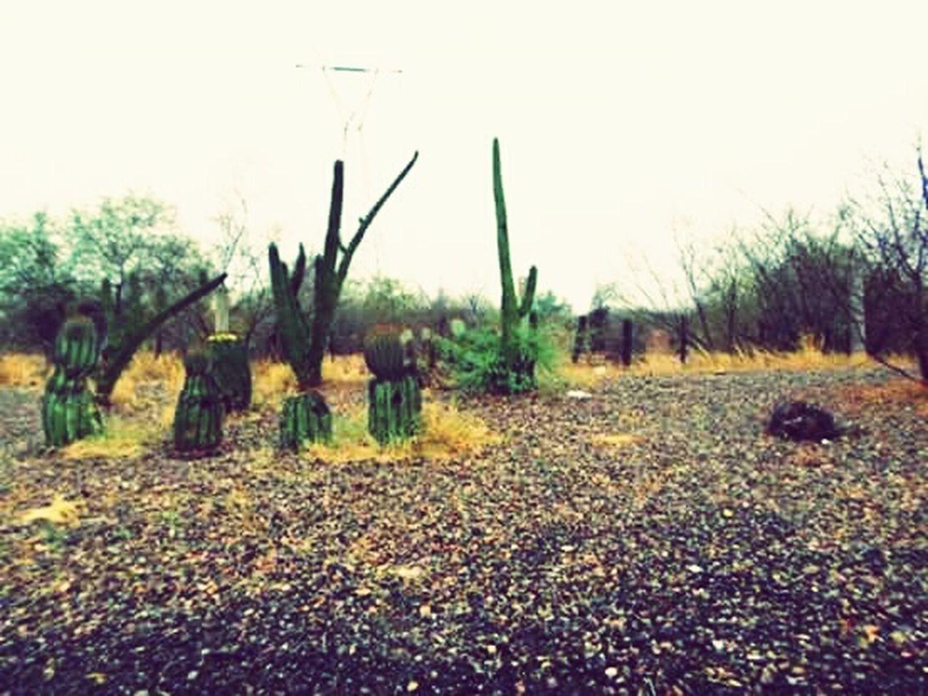 AmoMiTierra ... Desertico ... Primeralluviadelaño ...