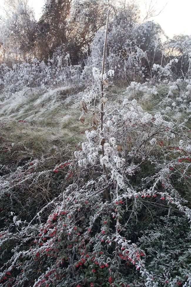 Ice Frosted Trees Frosted Landscapes Frosted Frosted Nature Cold Temperature Branch Bough Cold