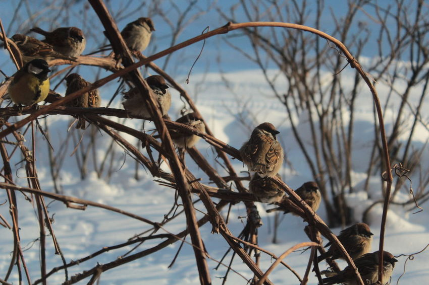 Animal Themes Day Nature No People Outdoors Snow Sparrow Sparrow Bird Sparrow In A Tree Sparrow On A Branch Sparrows Sparrows Feeding Tomtit Tomtit In Birdhouse Winter