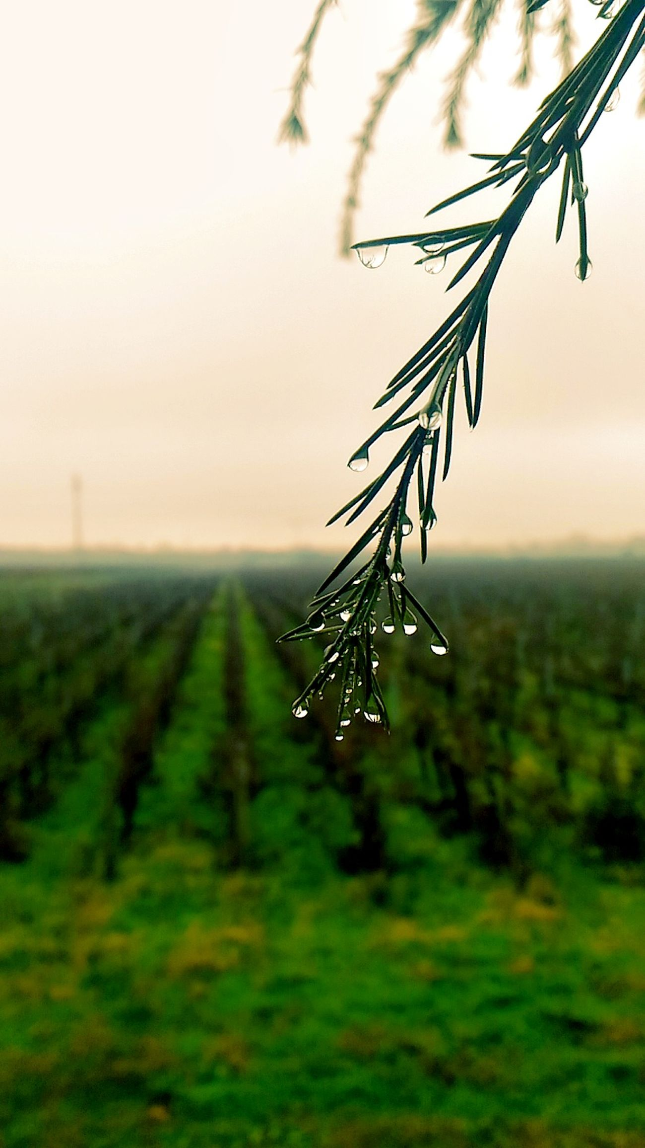 Nature Landscape Wine Water Waterdrops Ice Like4like Follow4follow Photooftheday Green Green Nature